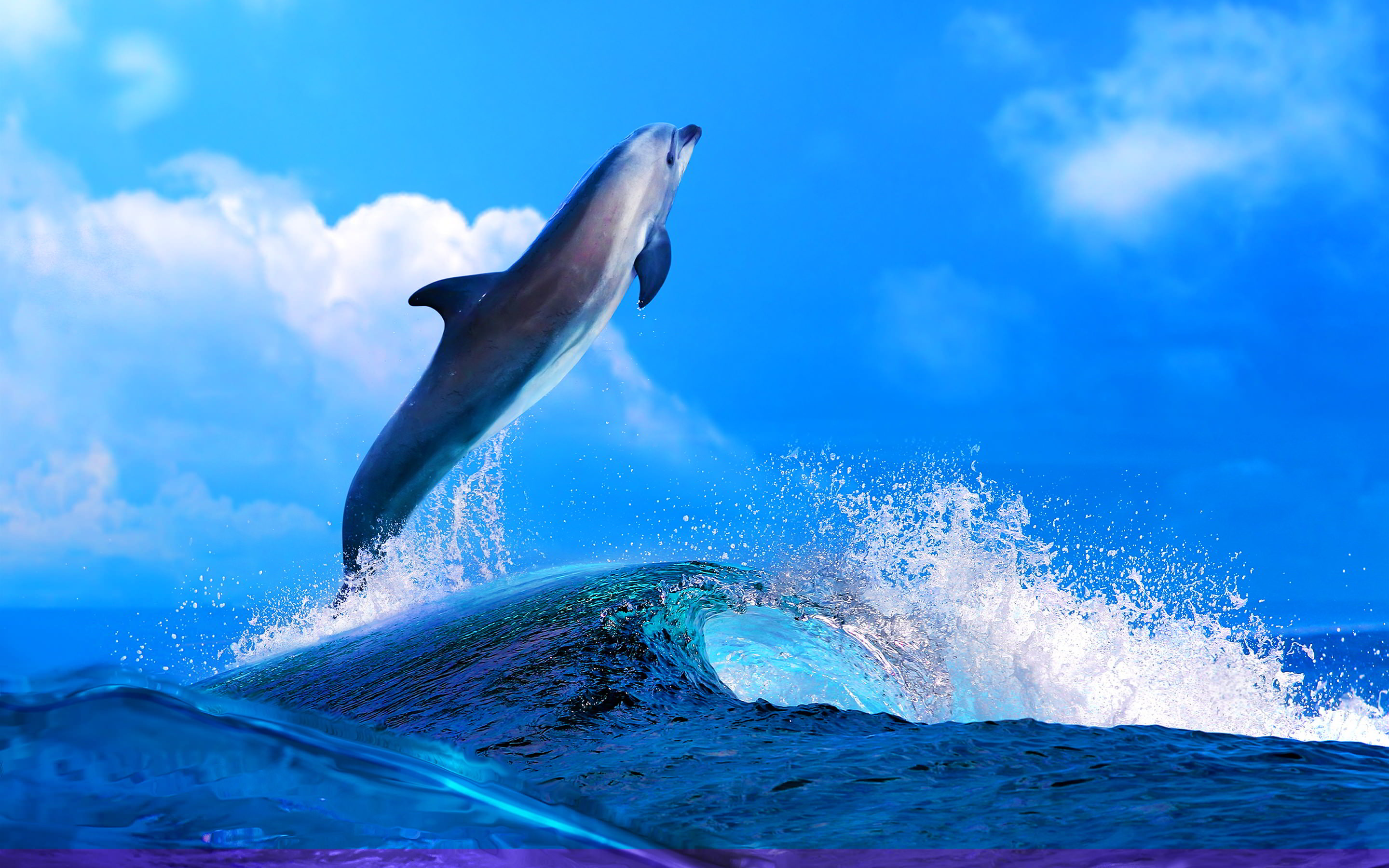 dolphin cool wallpaper