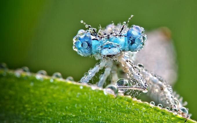 dragonfly wallpaper hd