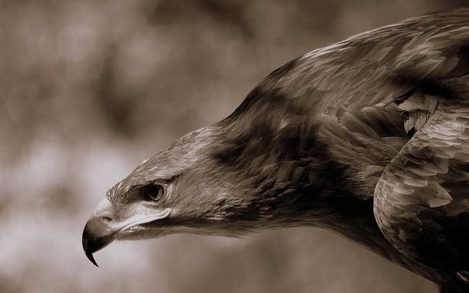 eagle beautiful