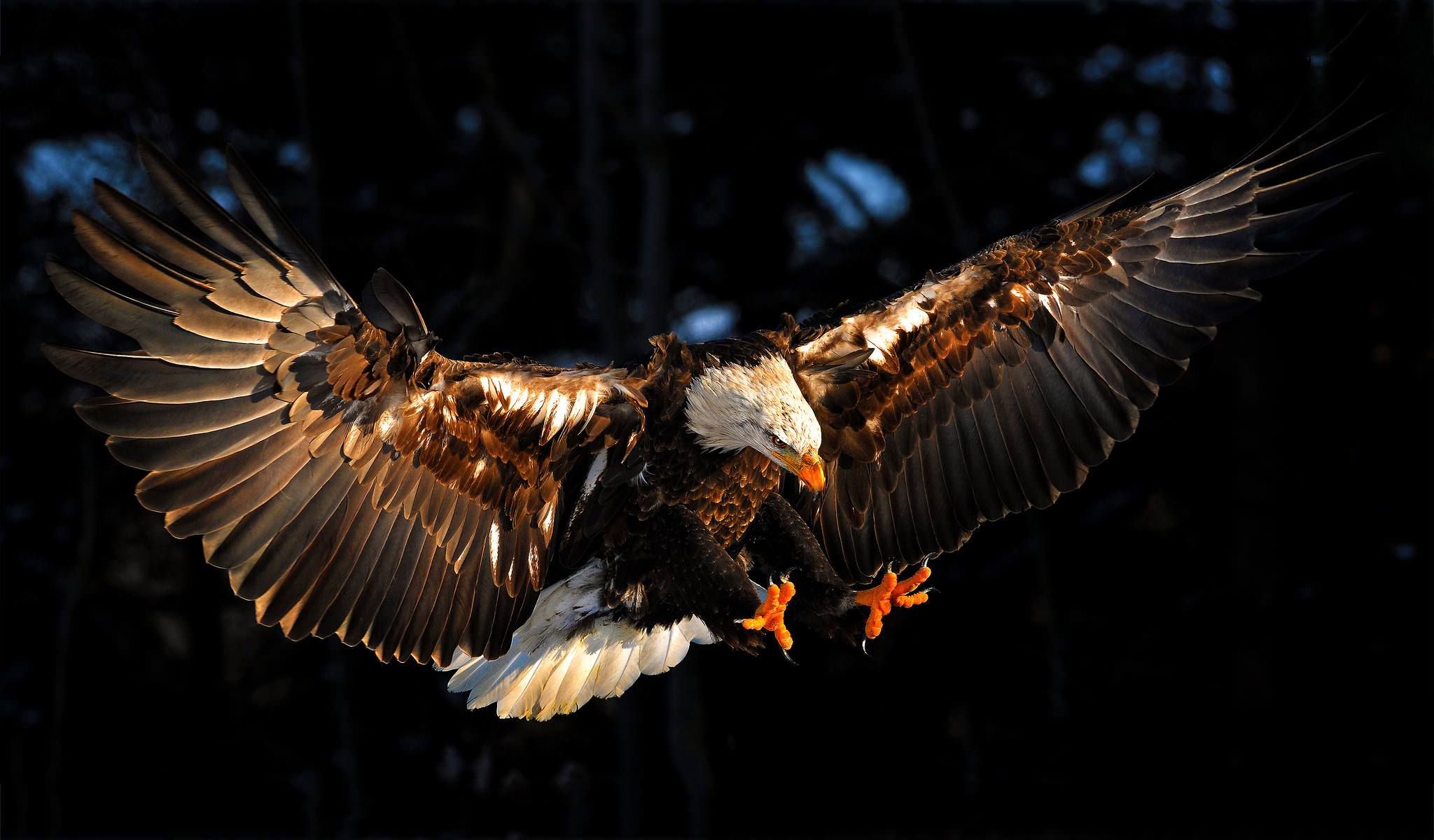 eagle 1280x1024 wallpaper - photo #35