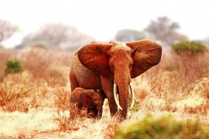 elephant baby images