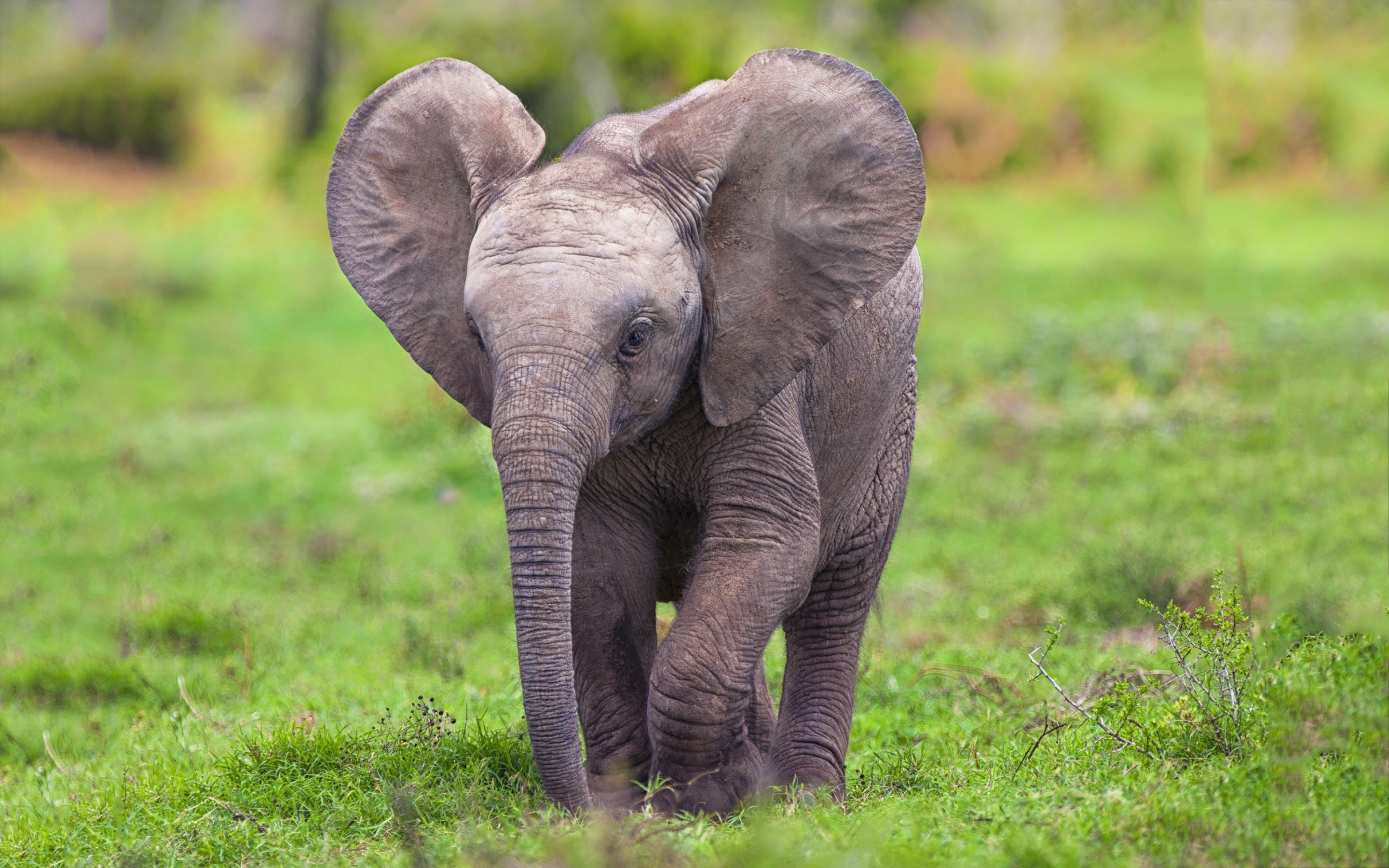 elephant baby pictures free