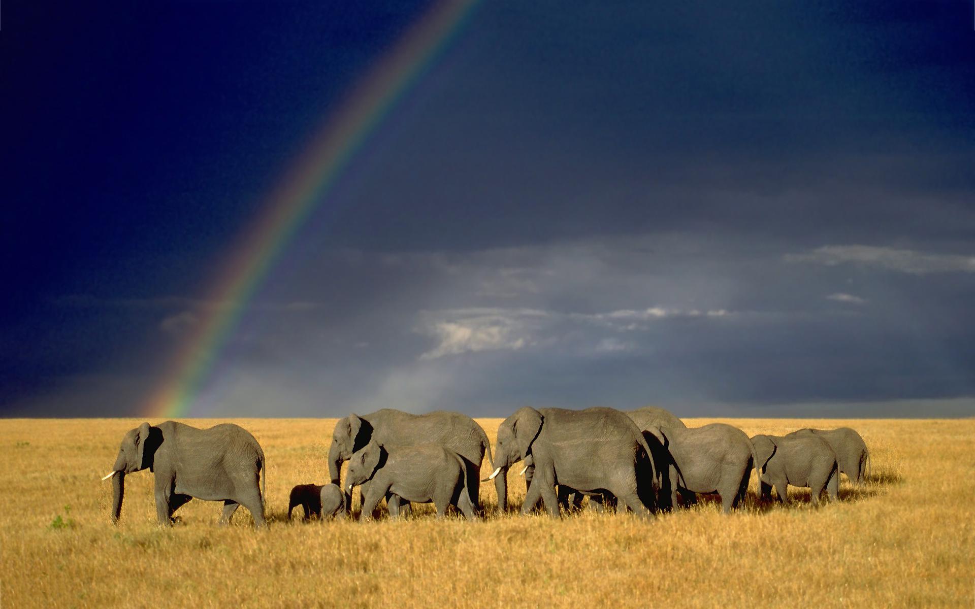 elephant herd rainbow wallpaper