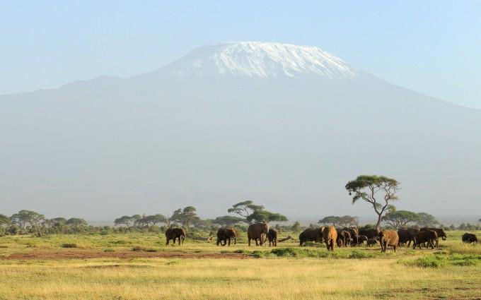 elephant herd wallpaper