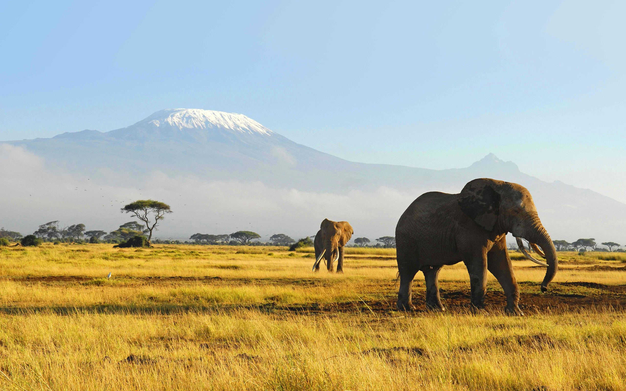 elephants wildlife nature