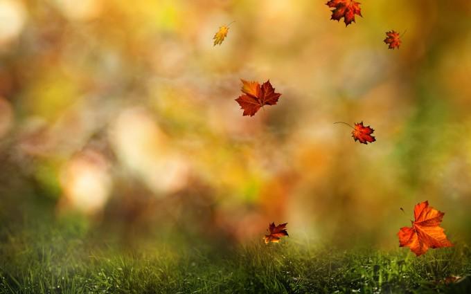 fall wallpaper forest