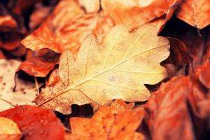 fall wallpaper nature