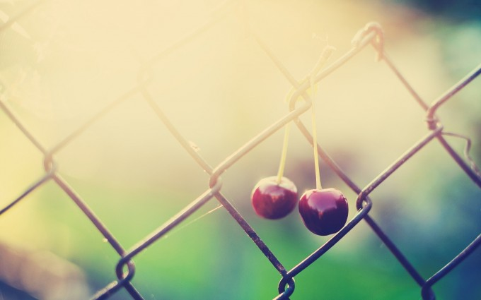 fence cherry nature photo