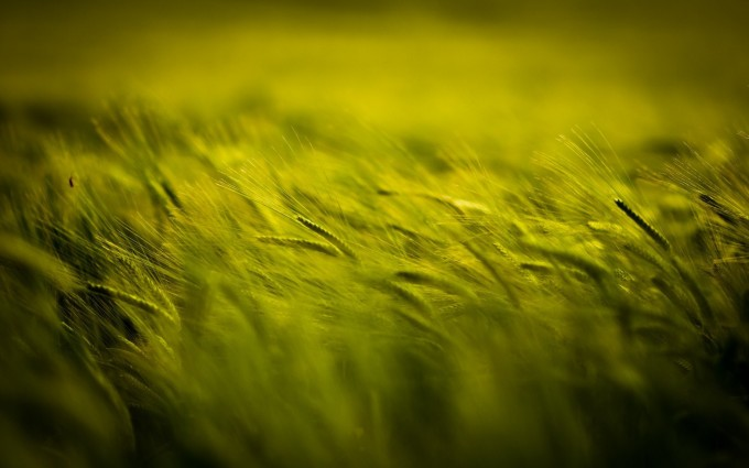field green nature