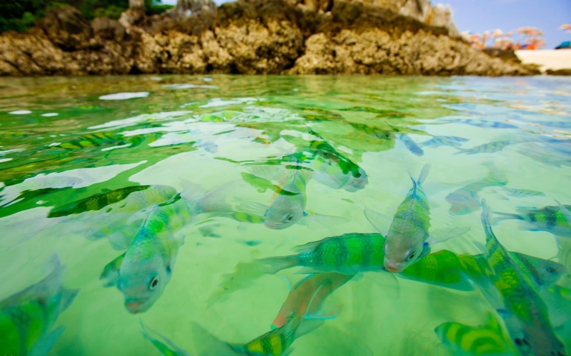 fishes desktop wallpaper