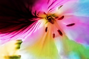 flower colorful