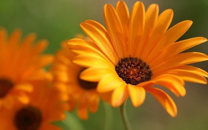 flower orange petals macro