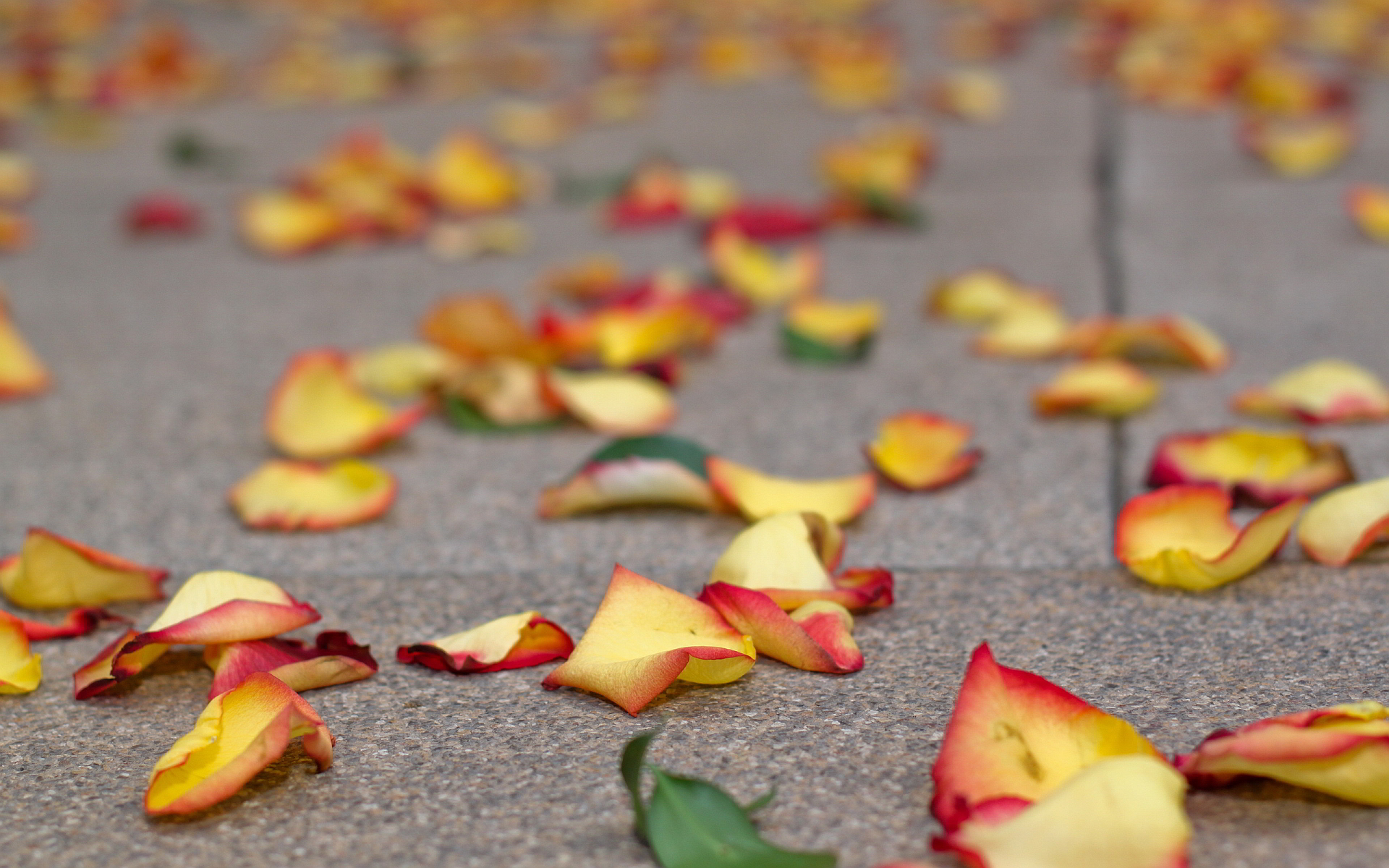 flower petals amazing