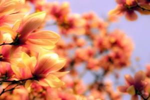 flowers wallpaper blurred orange