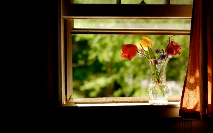 flowers wallpaper window