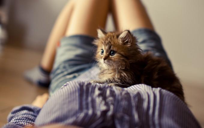 fluffy kitten on a girl