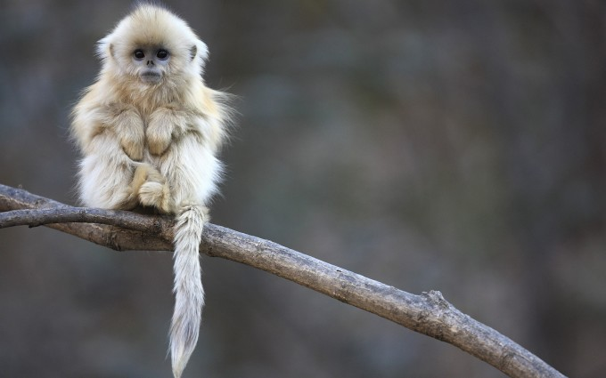 fluffy monkey cute images