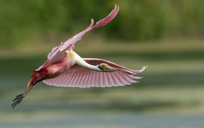 flying bird images