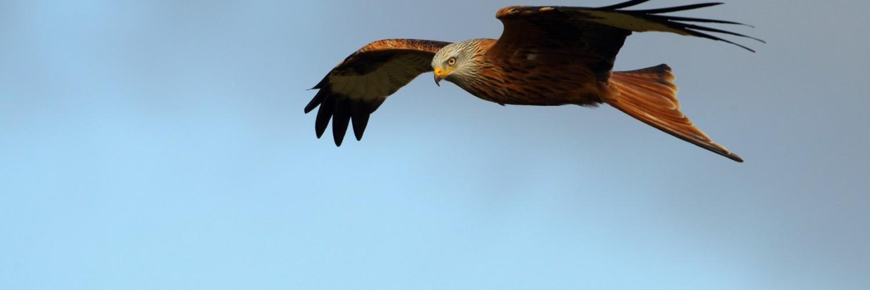 Flying Bird Images Hd - HD Desktop Wallpapers