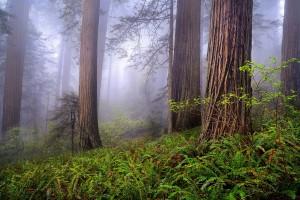 fog backgrounds nature
