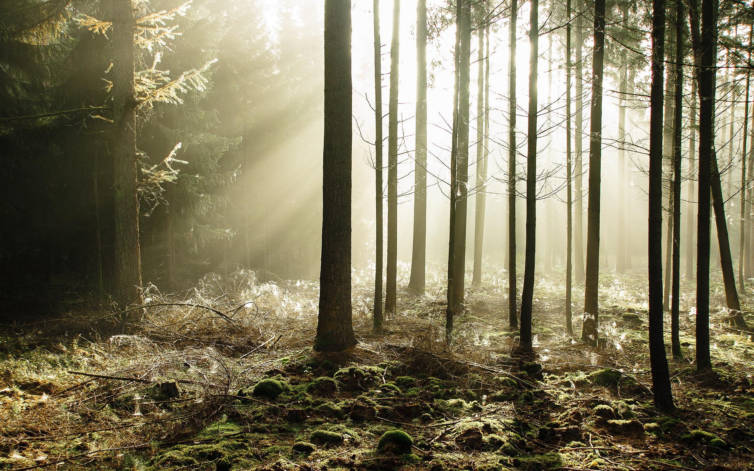 forest desktop backgrounds