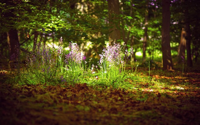 forest flower photos