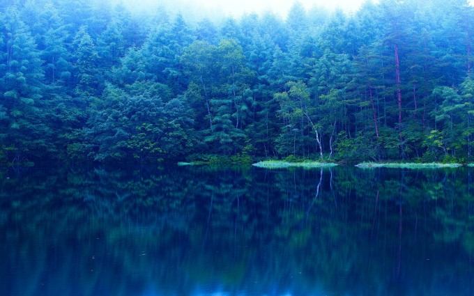 forest lake backgrounds