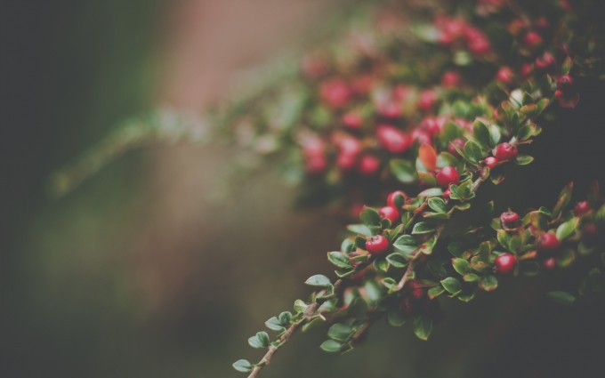 forest macro photography