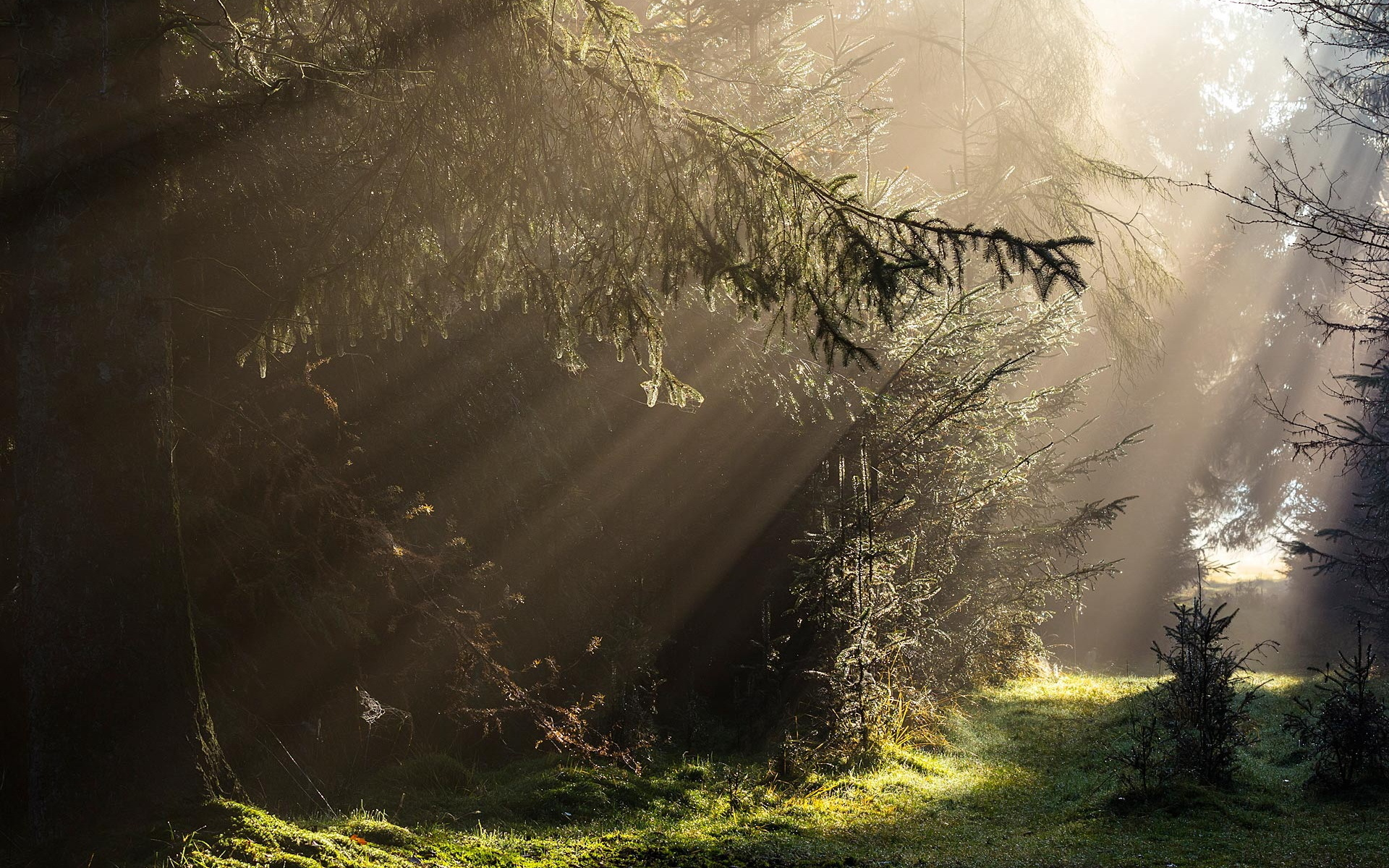 forest morning sunshine