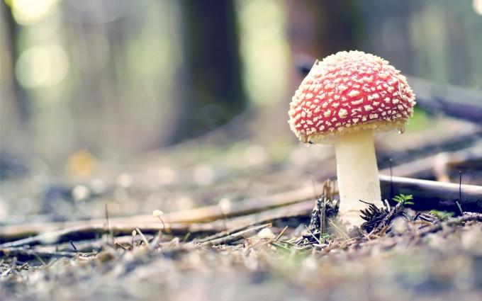 forest mushroom cool hd