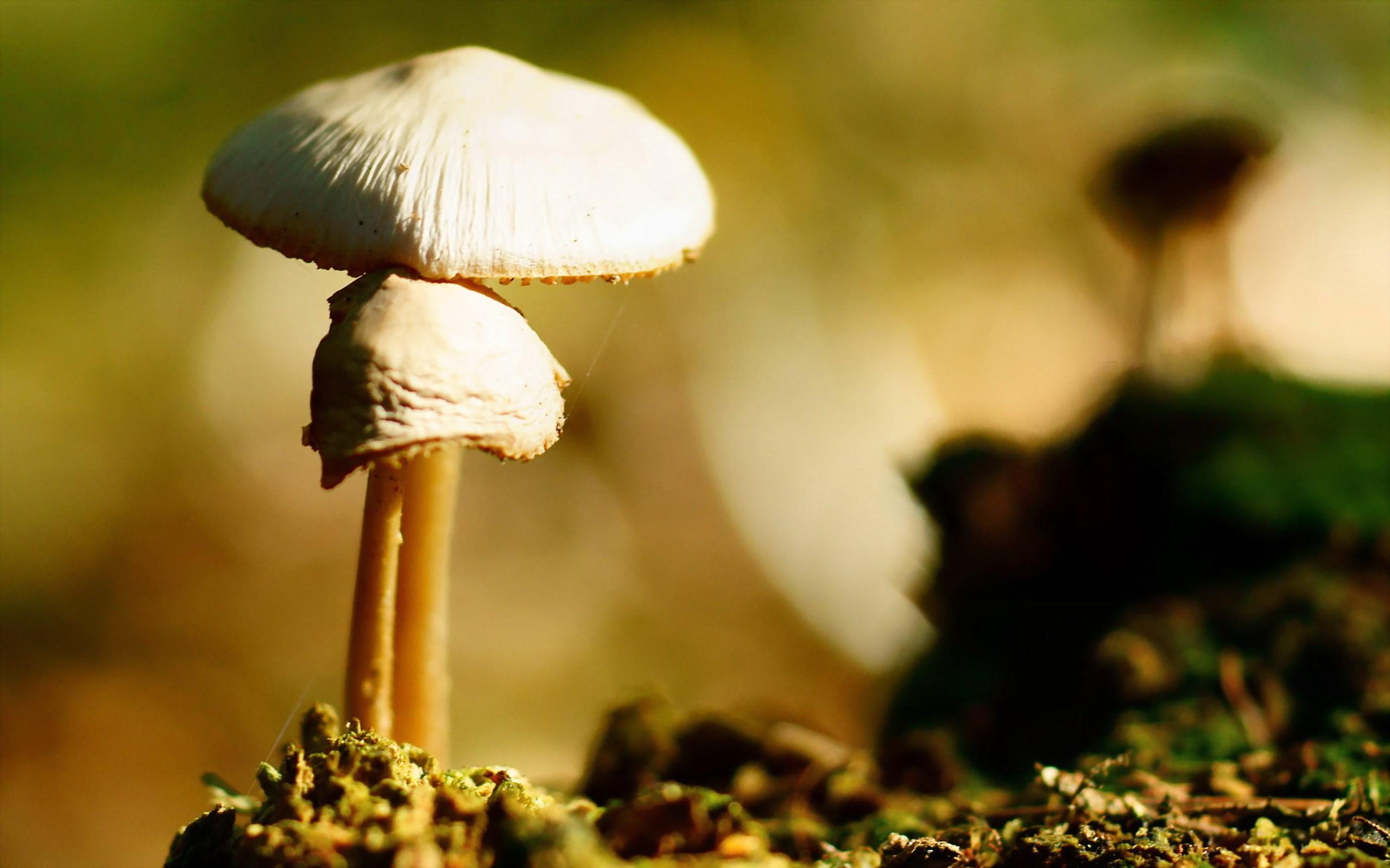 forest mushroom nature