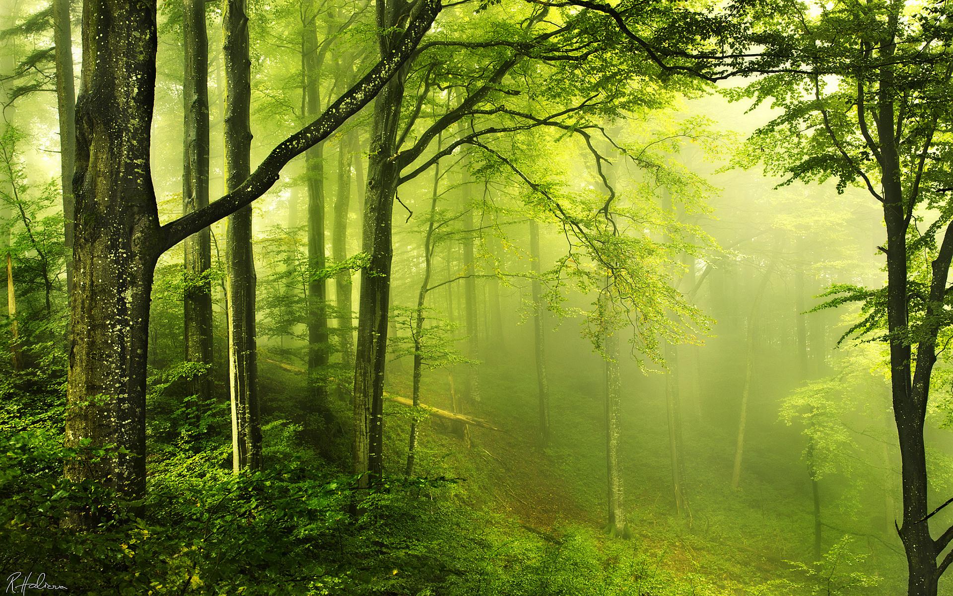 forest nature green wallpaper