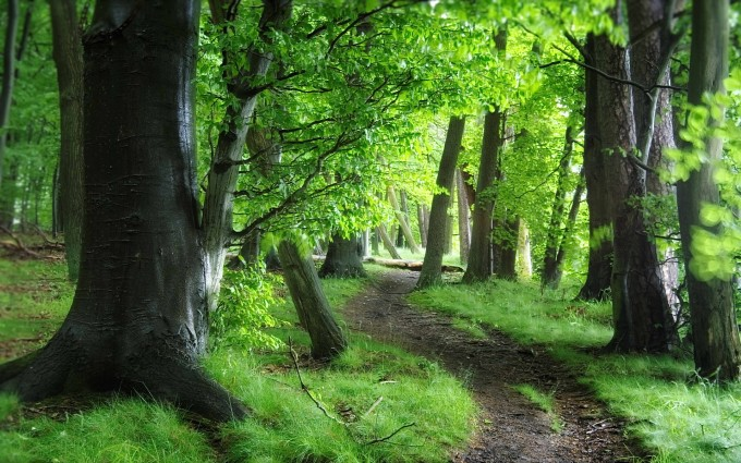 forest path wallpaper hda6