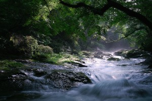 forest river hd images