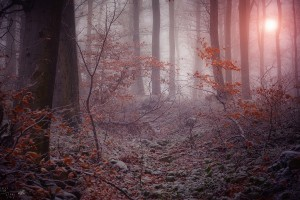 forest winter images