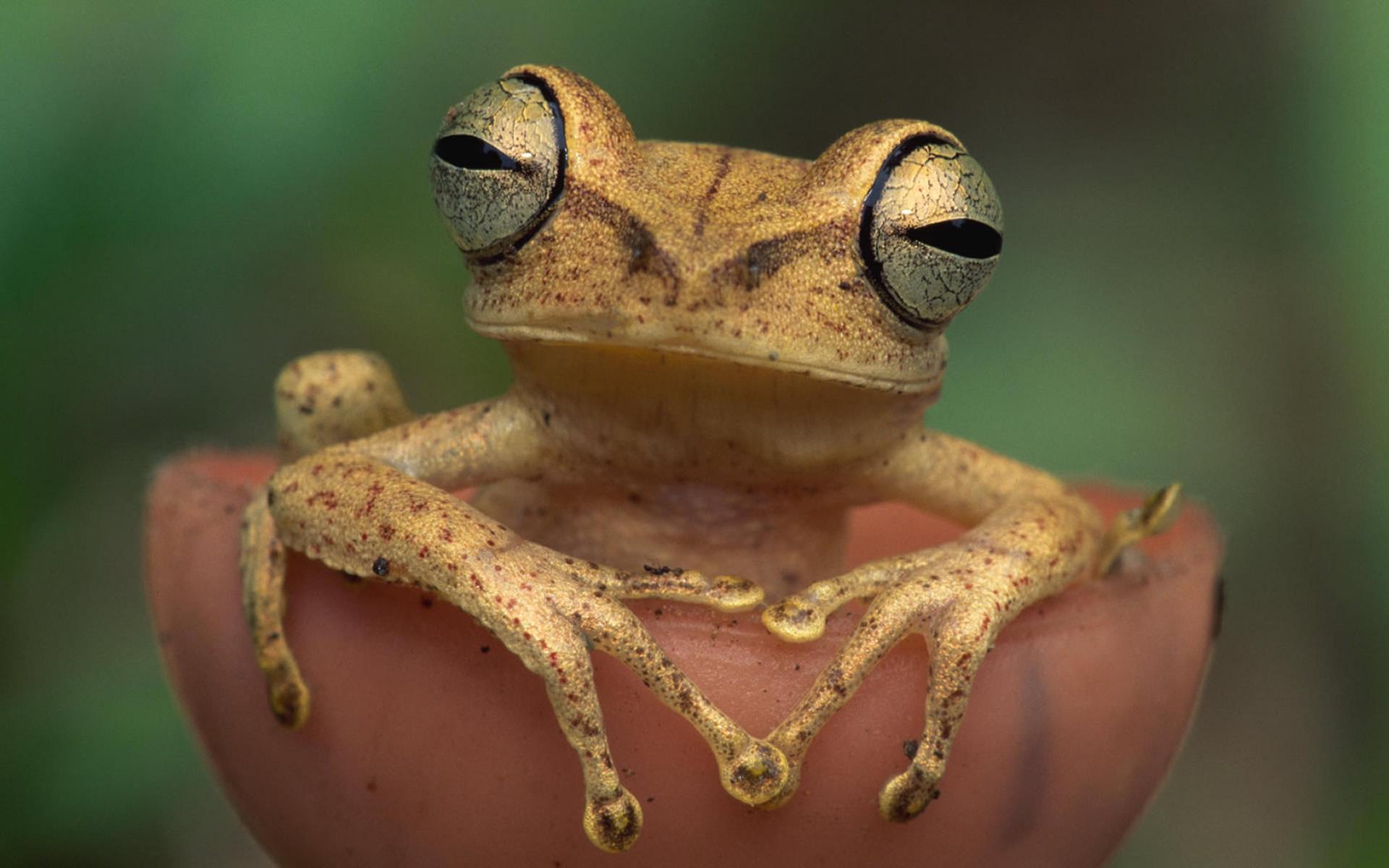 frog cute desktop background