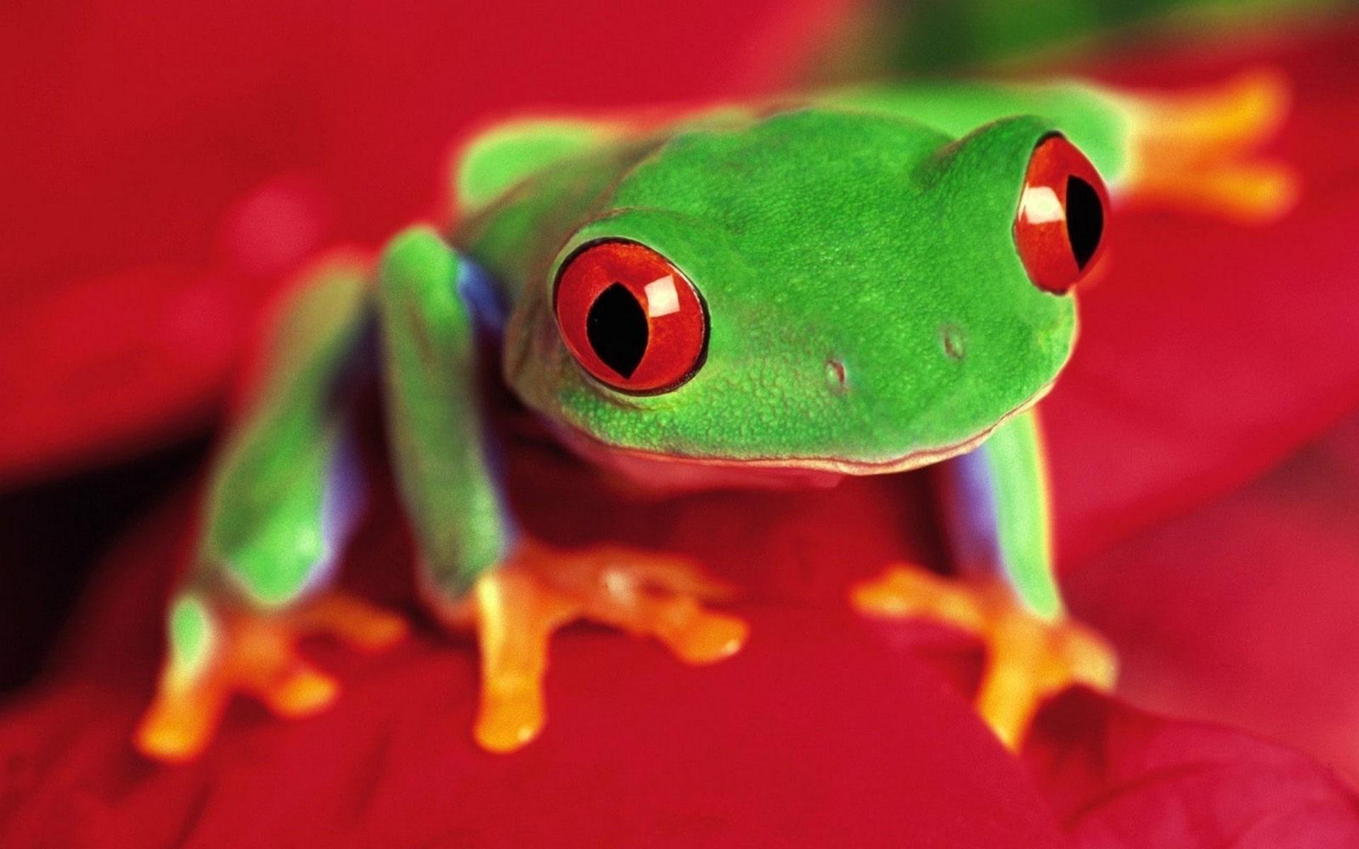 frog funny eyes
