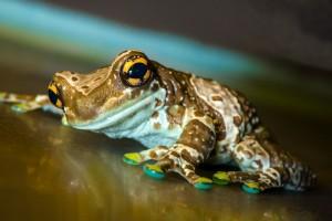 frog images download