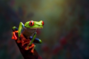 frog images hd download