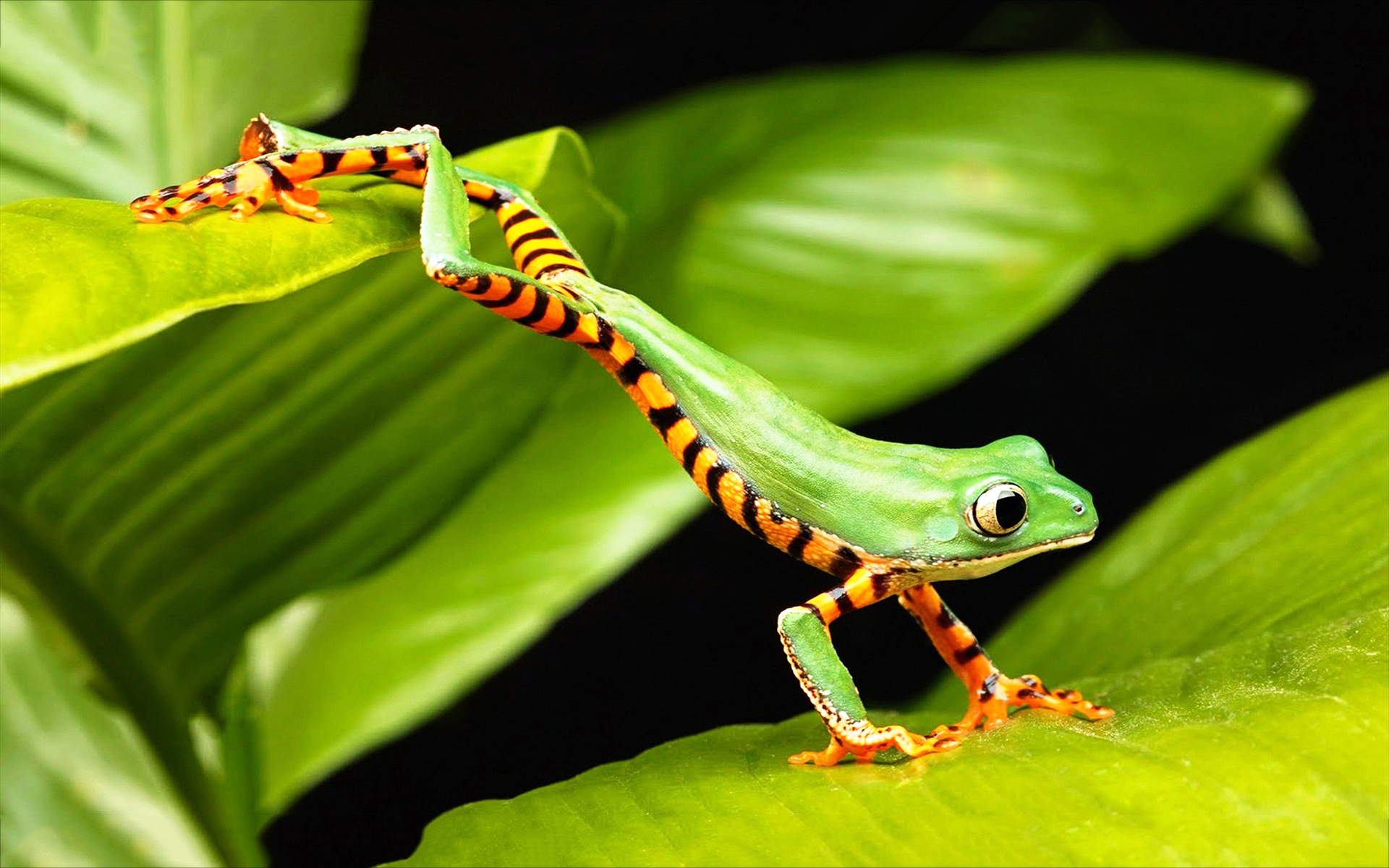 frog jumping images