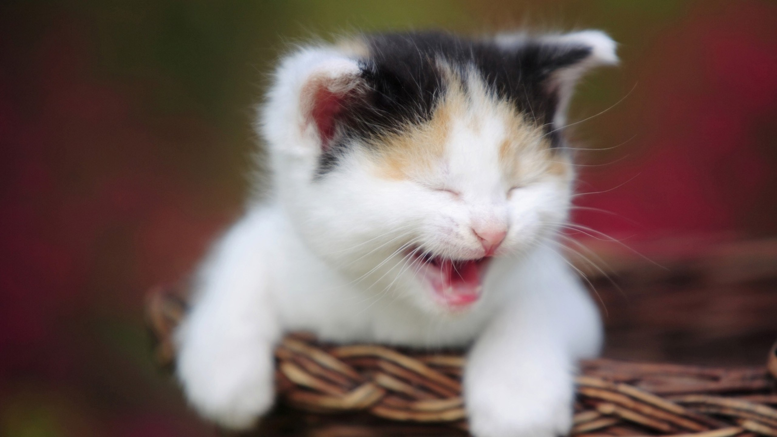 funny cat animal wallpaper