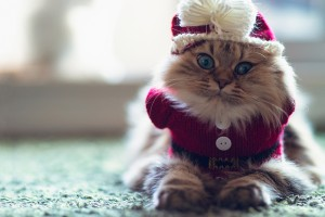 funny cat pictures hd