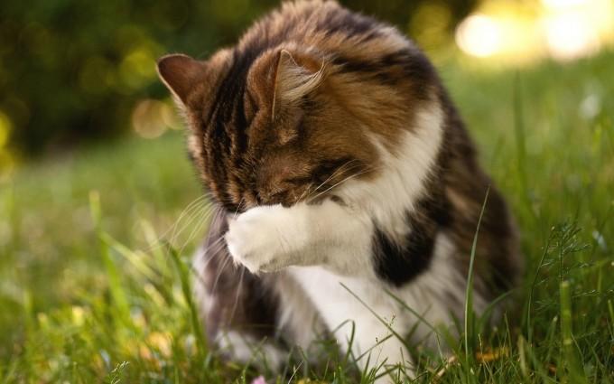 funny cat sweet