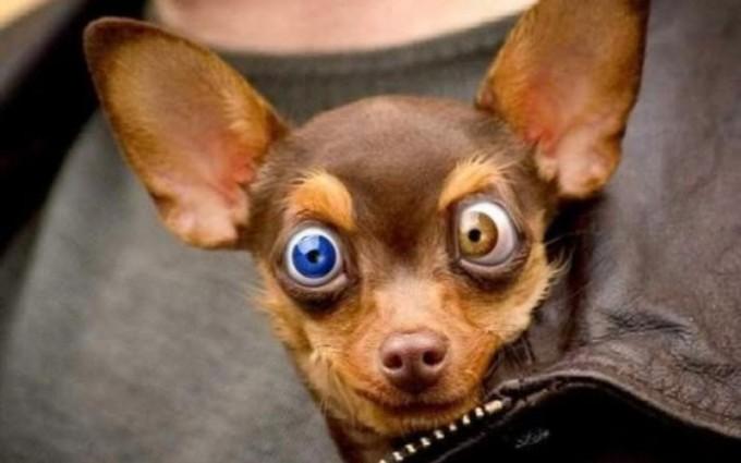funny cute dog