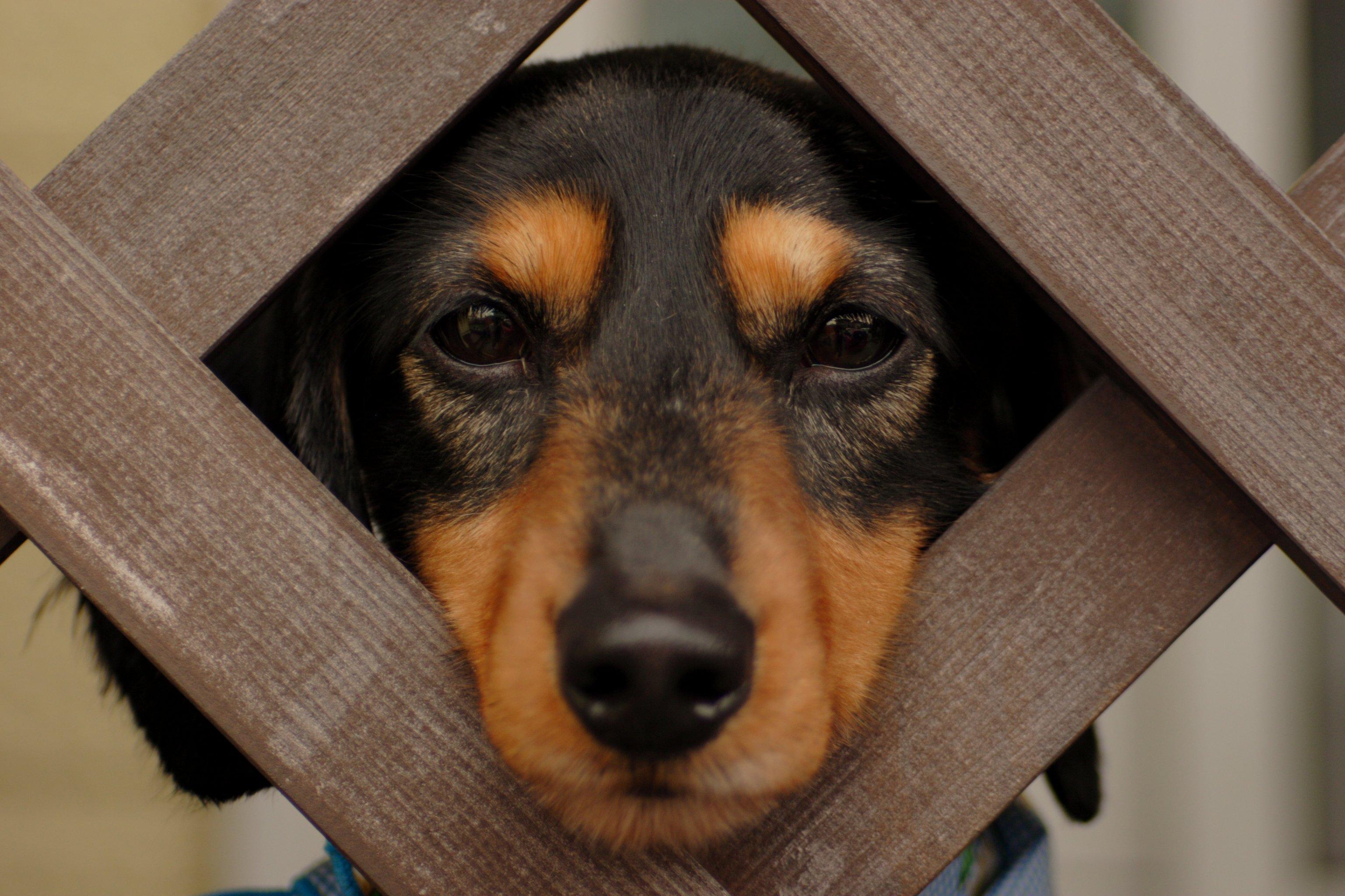 funny dog hd