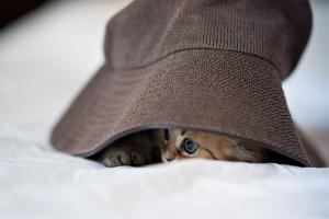 funny kitten desktop wallpaper