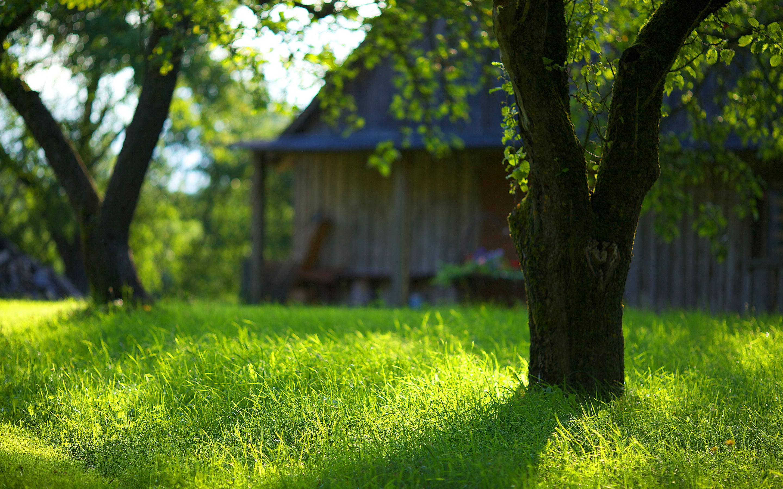 garden green grass images hd desktop wallpapers 4k hd