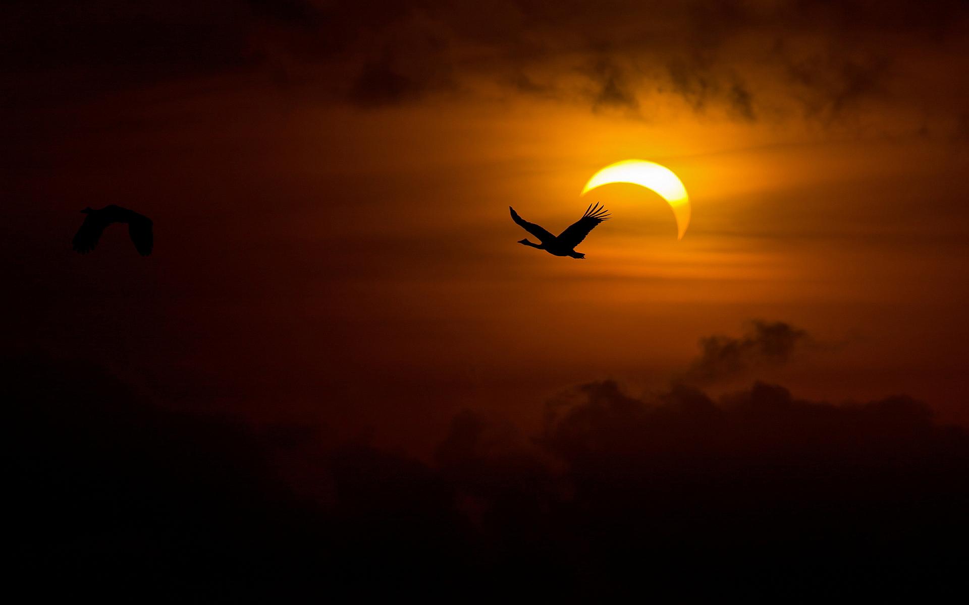 geese sunset hd