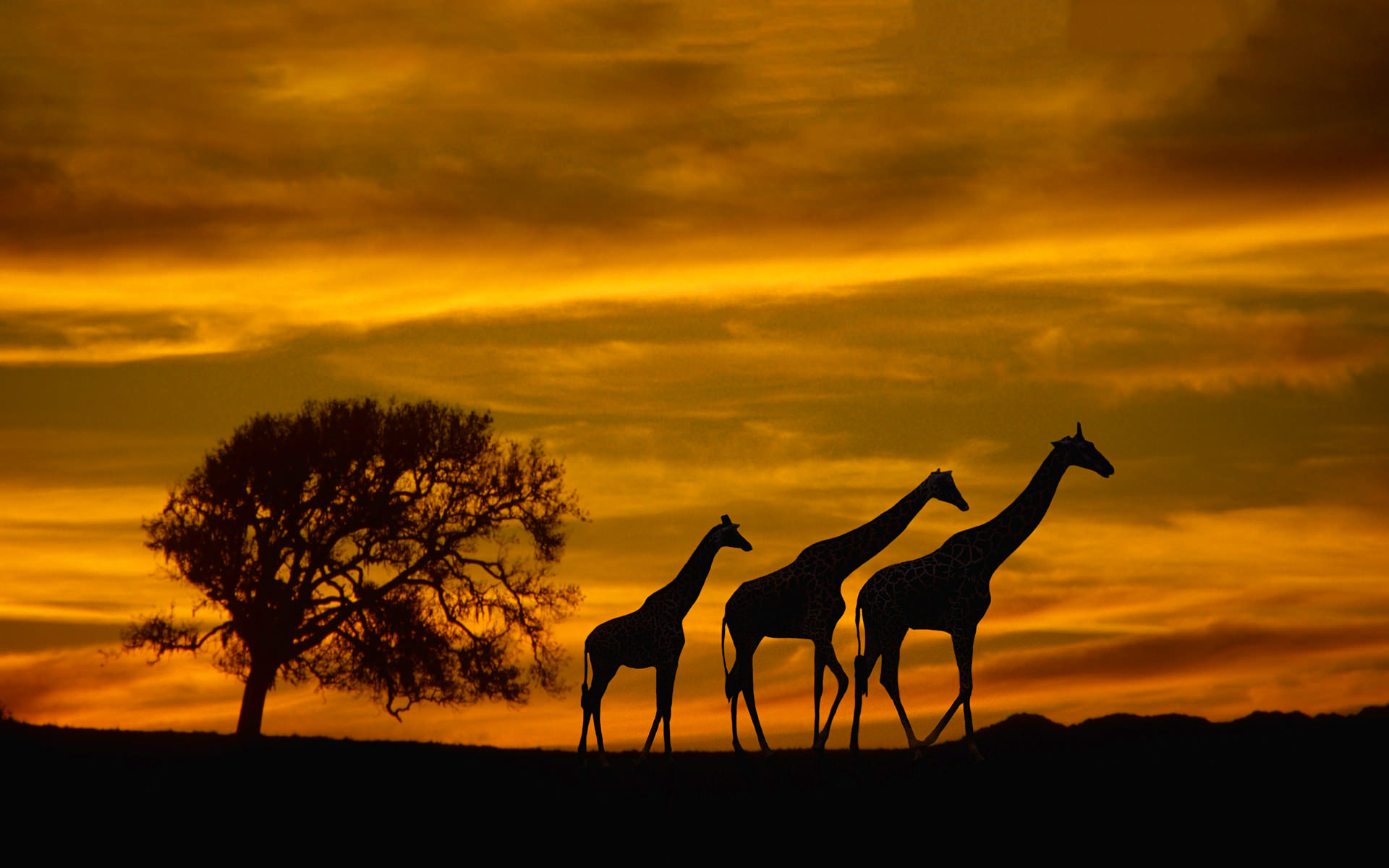 Giraffes family hd desktop wallpapers 4k hd - Family tree desktop wallpaper ...