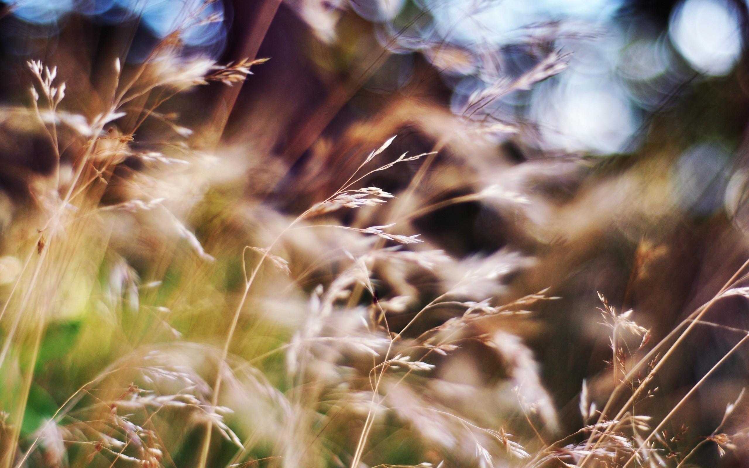 grass beautiful